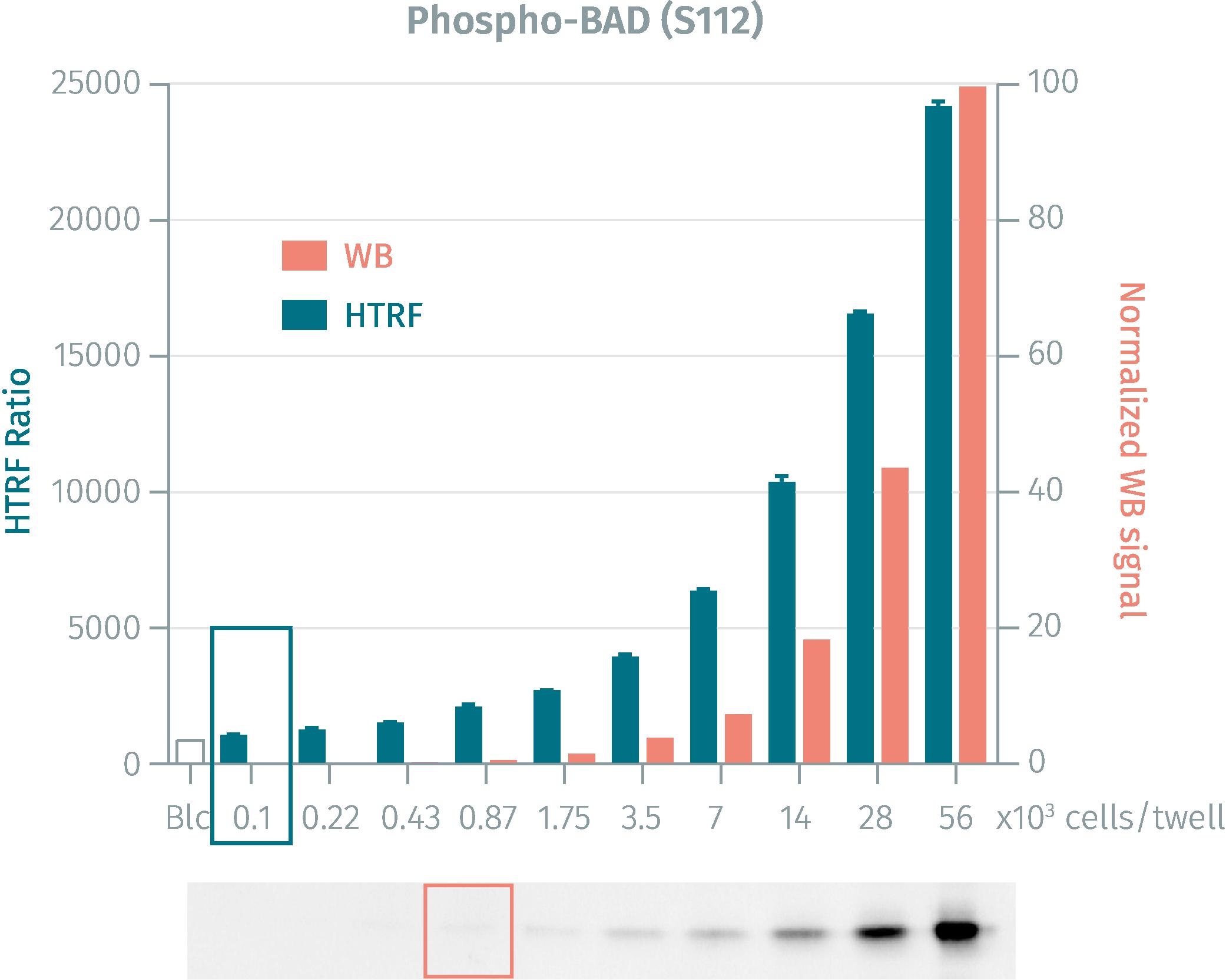 Western Blot versus HTRF assay for Phoshpo-BAD (Ser112) kit