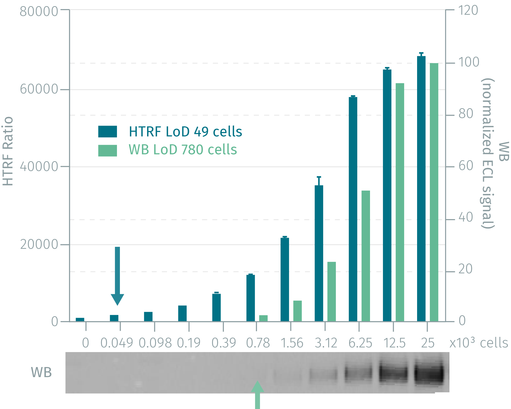 HTRF total EGFR assay compared to Western Blot