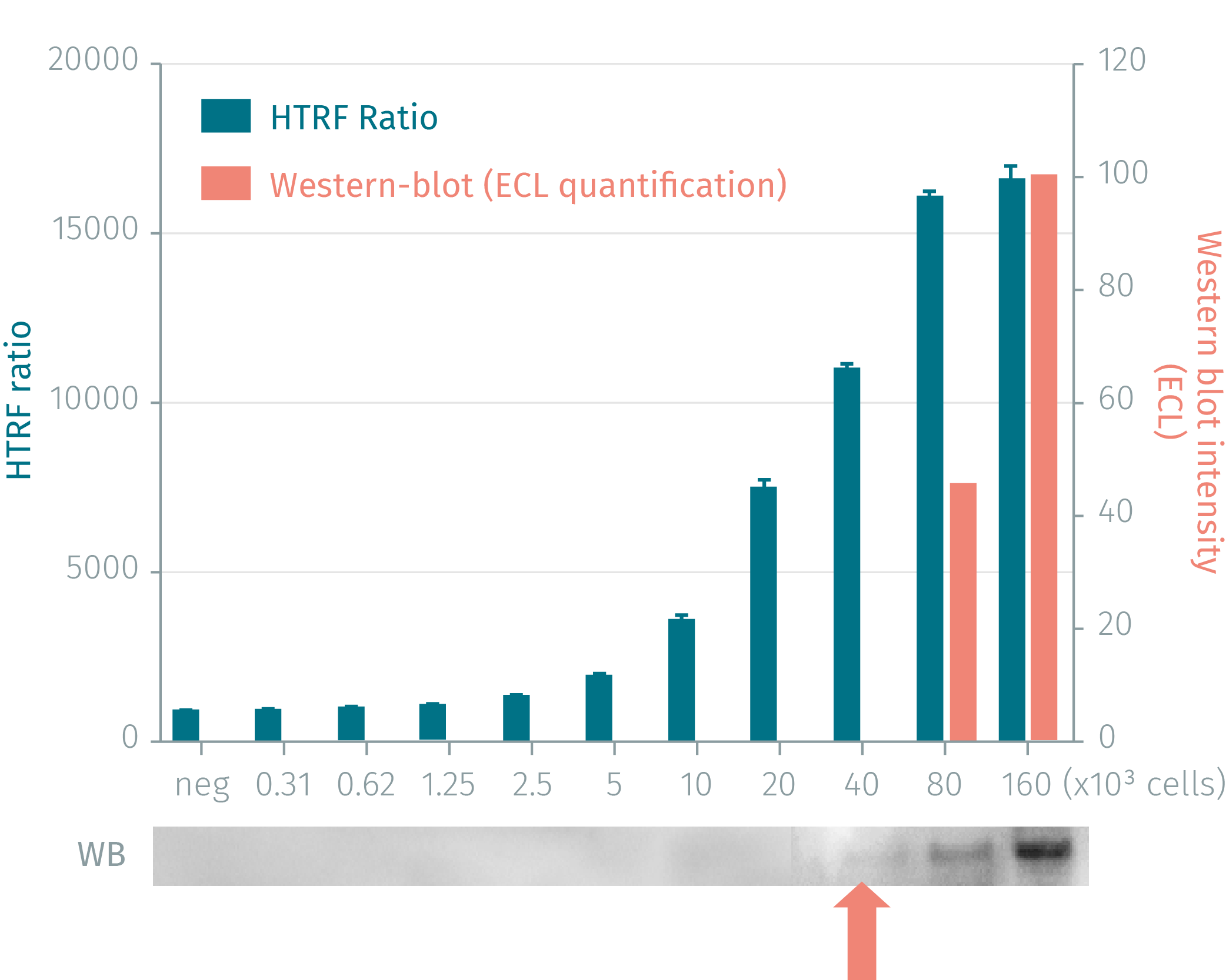 HTRF phospho-H2AX cellular assay compared to Western Blot