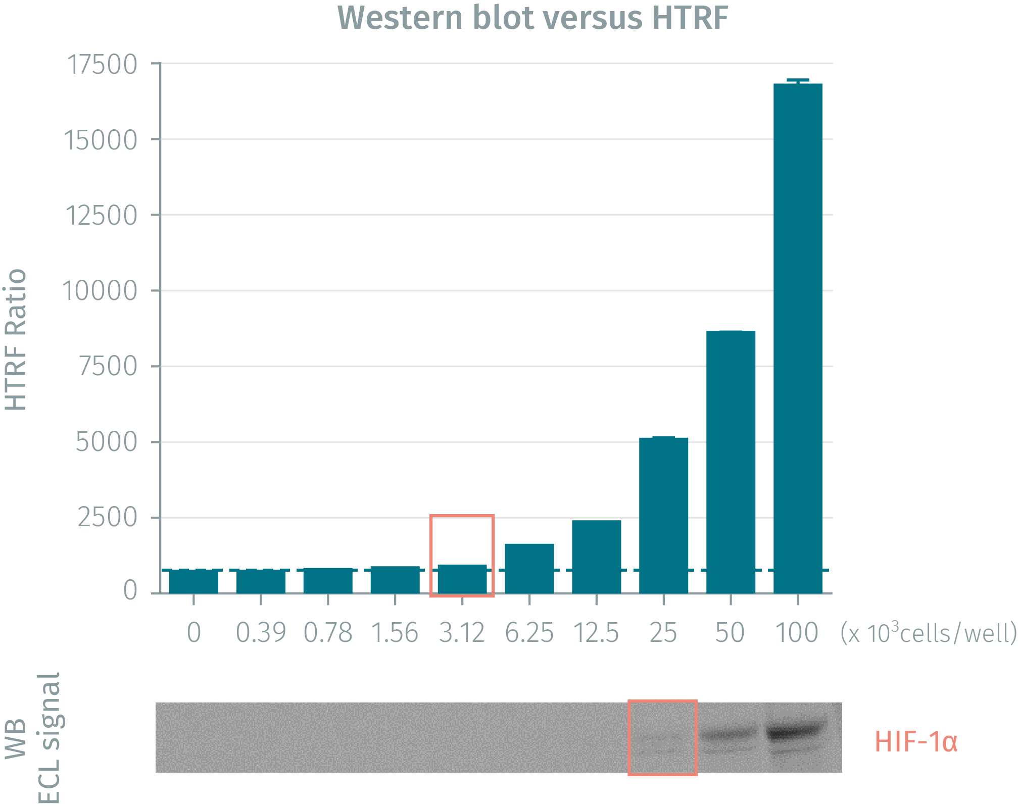 HIF1-a protein level comparison HTRF vs Western Blot