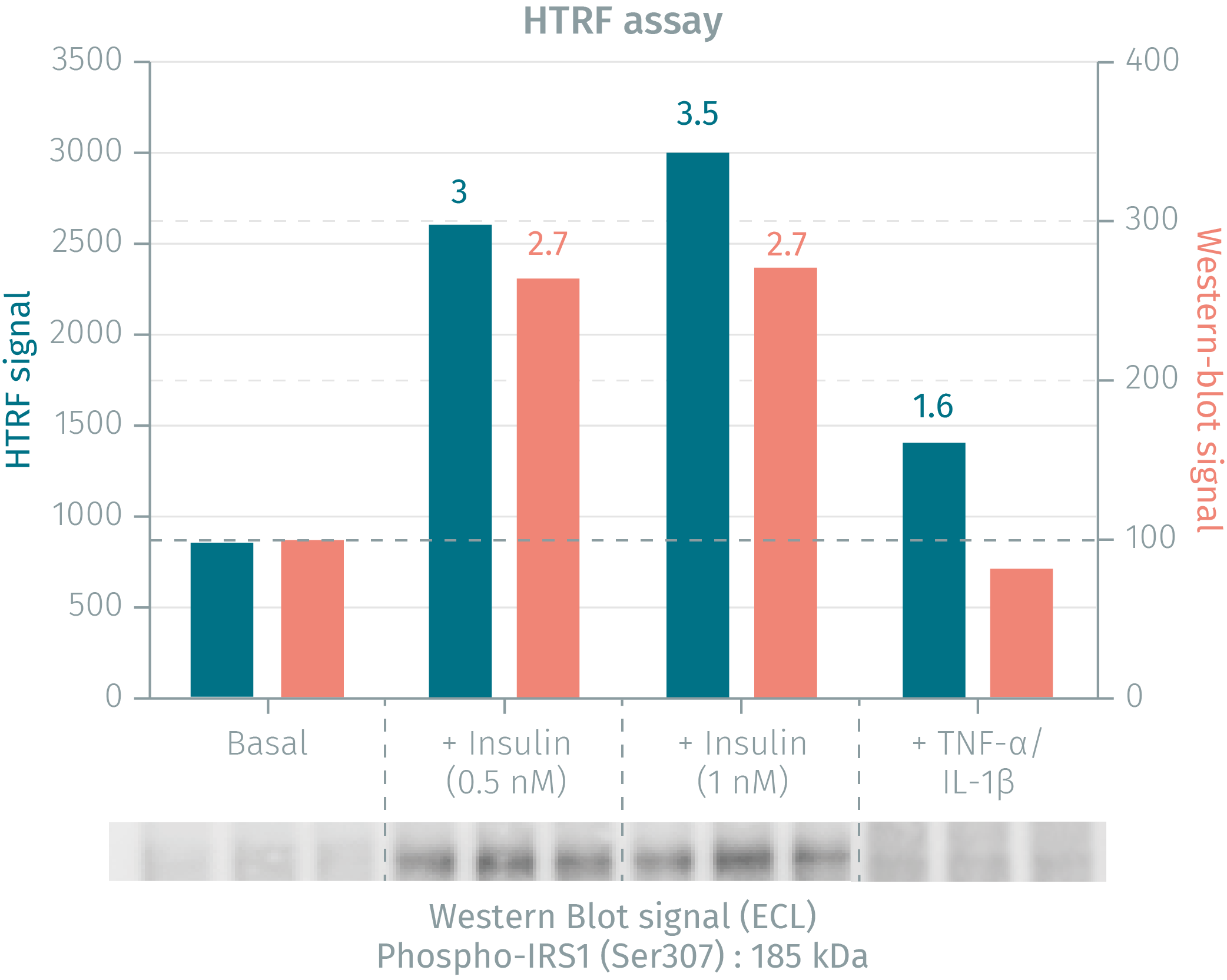 HTRF phospho-IRS1 assay compared to Western Blot