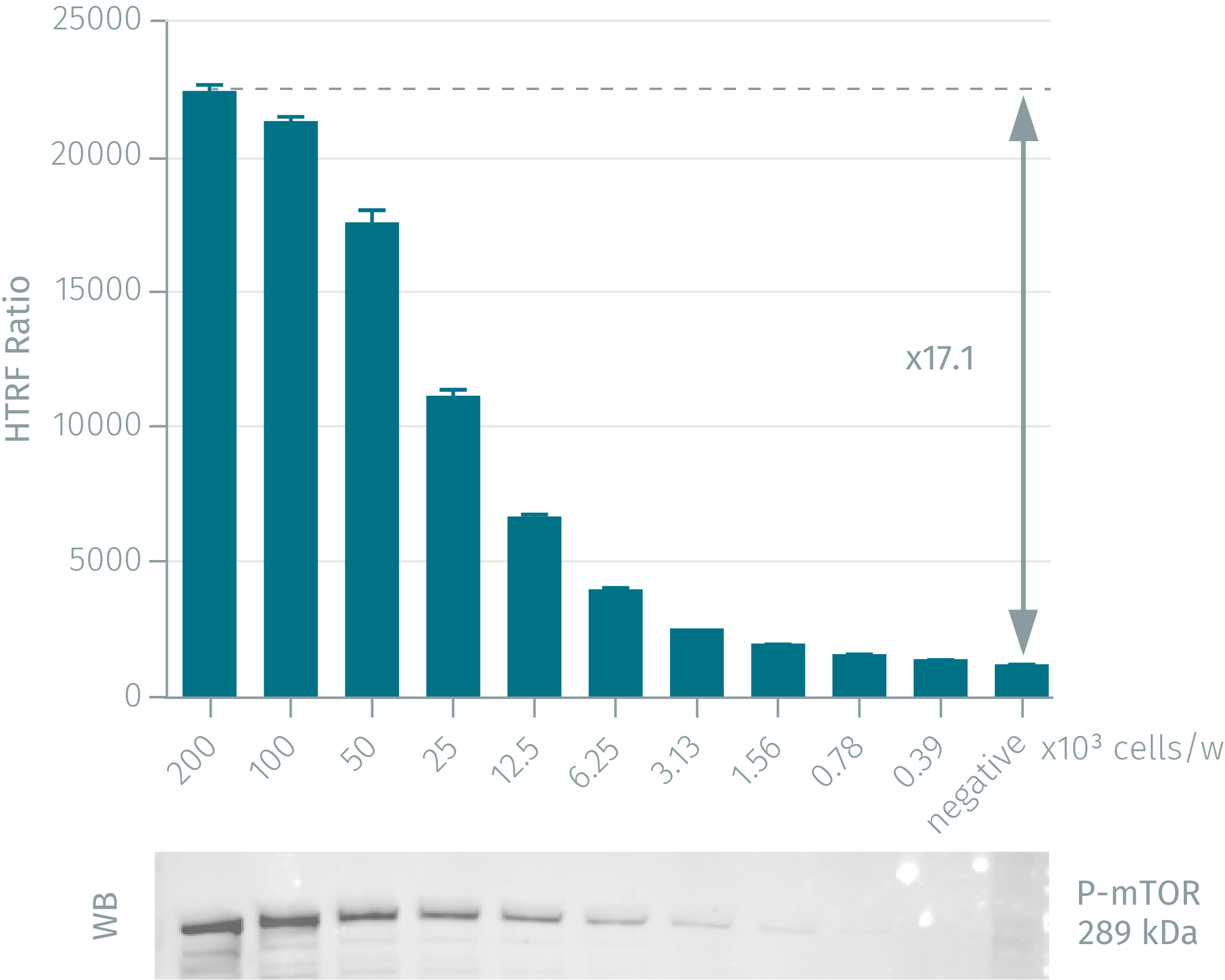 HTRF assay compared to Western Blot using phospho-mTOR cellular assay