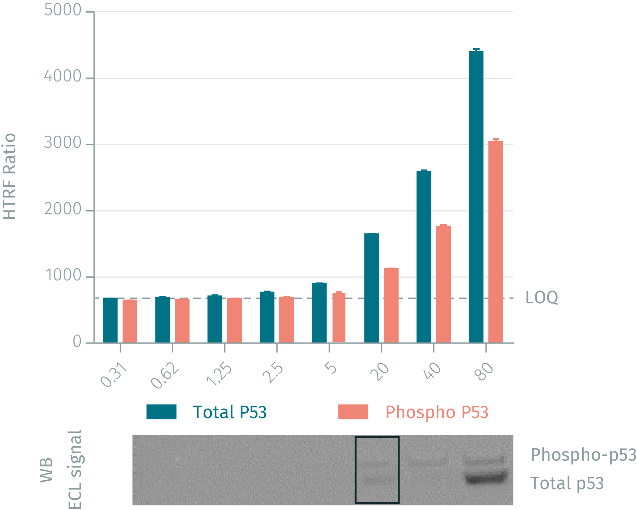 HTRF assay vs WB using phospho & total P53 assays on human MCF-7 cells