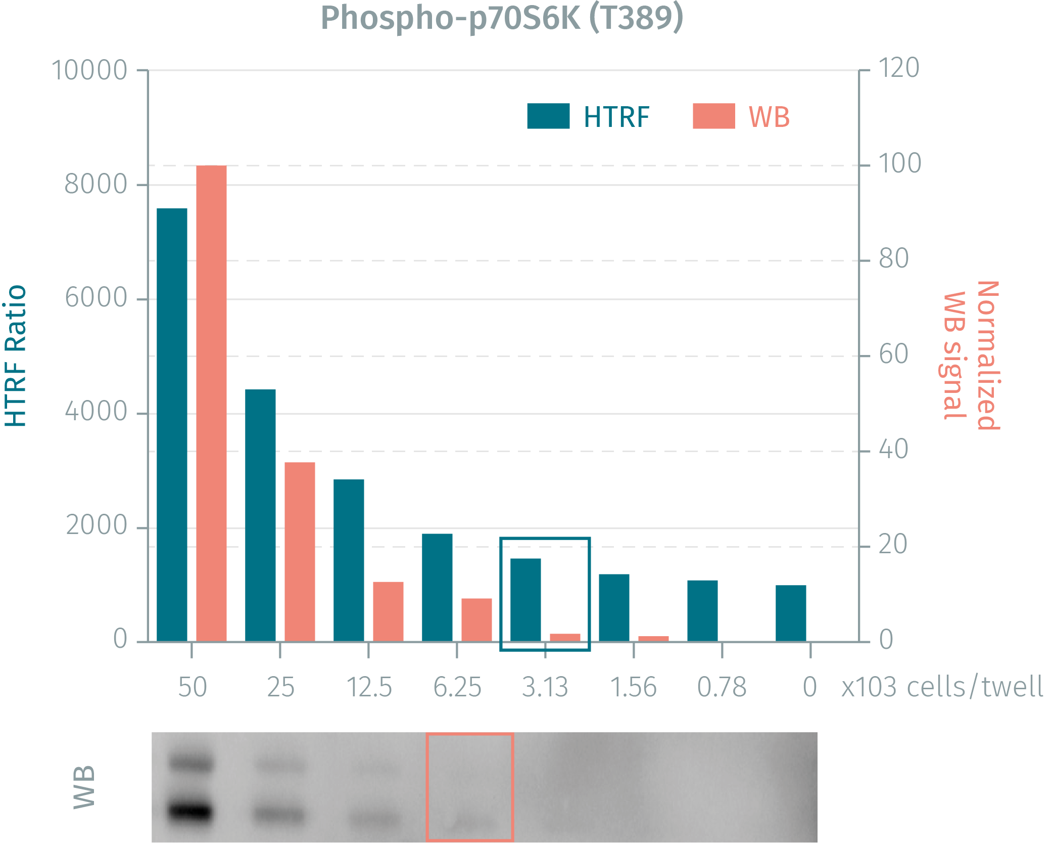 HTRF assay compared to WB using phospho-p70S6K cellular assay
