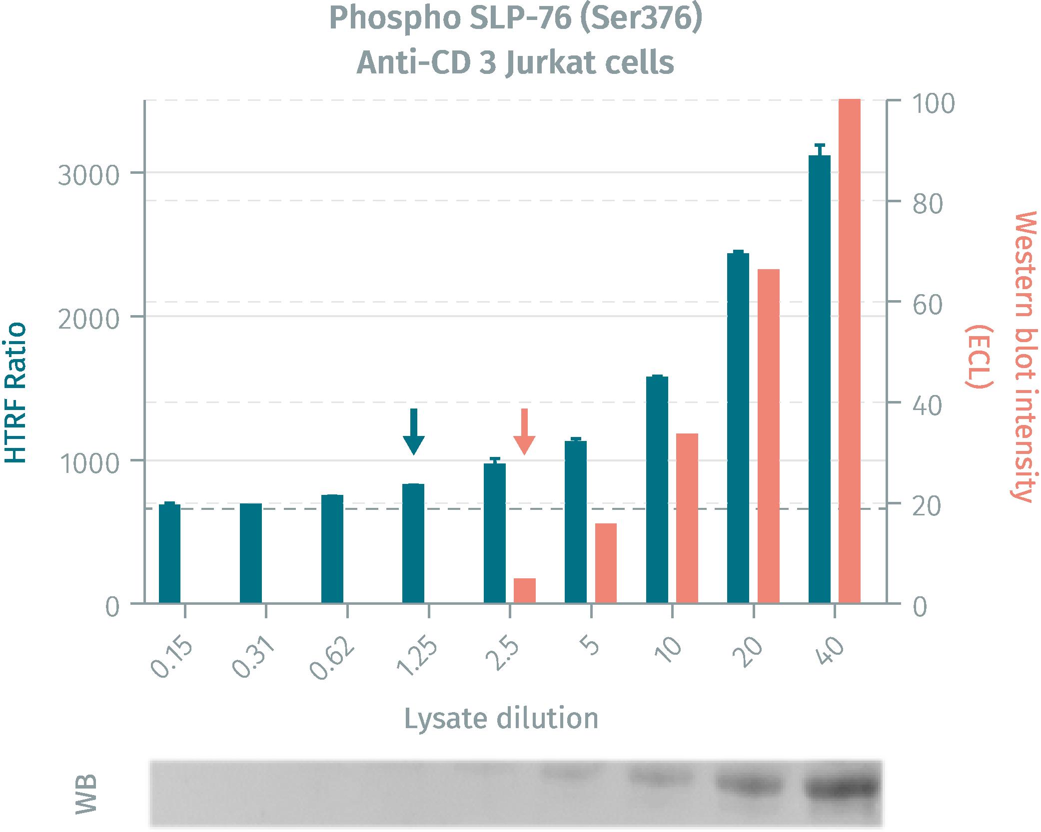 HTRF assay compared to Western Blot using phospho SLP-76 (Ser376) cellular assays on human Jurkat cells