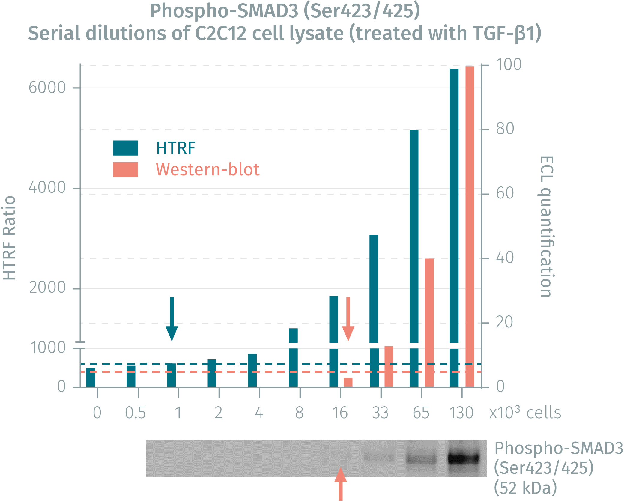 HTRF assay compared to Western Blot using phospho-SMAD3 assay
