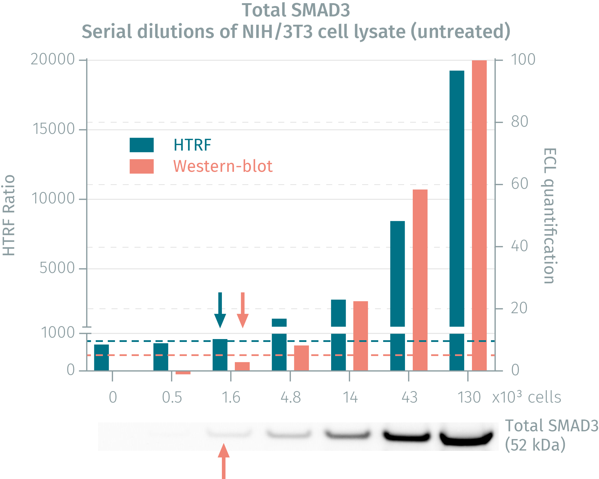 HTRF assay compared to Western Blot using total SMAD3 assay