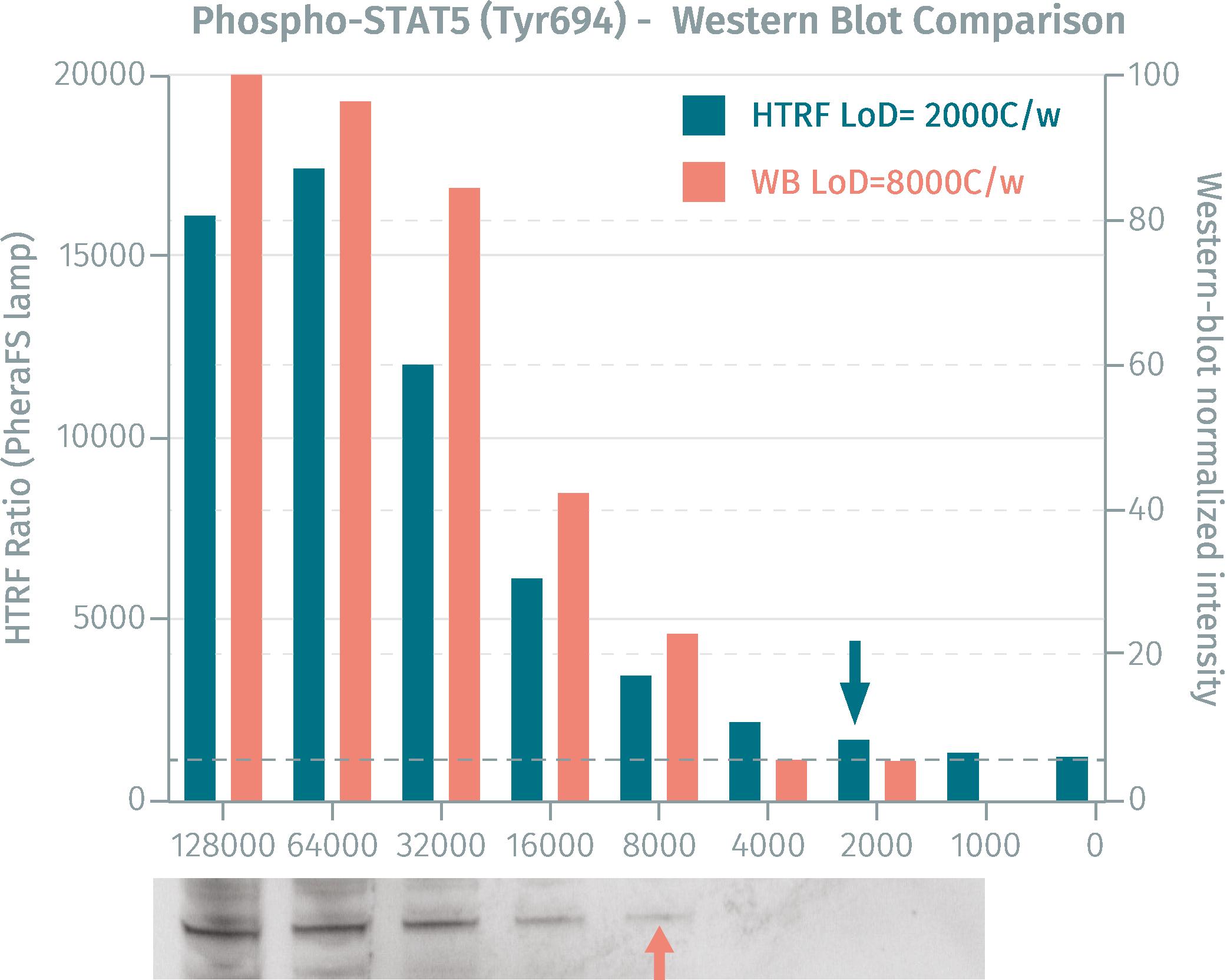 phospho-STAT5 (Tyr694) -Western Blot Comparison