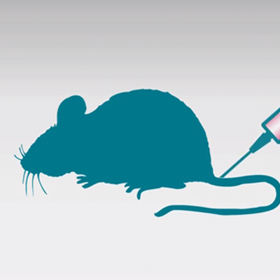Quantify insulin reliably in mouse serum and plasma samples