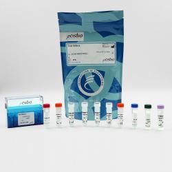 Total IKK-beta cellular kit