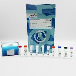 Phospho-GSK3 alpha (Ser21) cellular kit