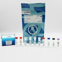 Phospho-P70S6K (Thr389) cellular kit