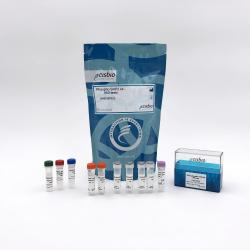 Phospho-SHP2 (Tyr542) cellular kit
