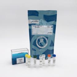 Human TIMP1 kit