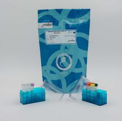Phospho-Ubiquitin (Ser65) Cellular Kit