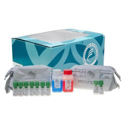 Procollagen-III-peptide radioimmunometric assay kit