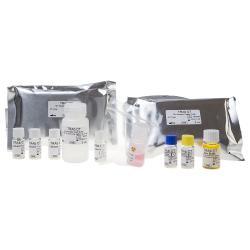 Dosage immunoradiométrique des auto-anticorps anti-récepteurs de la TSH