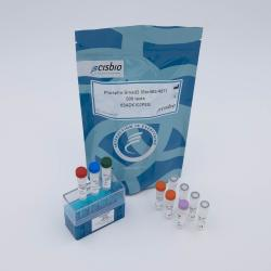 Phospho-SMAD2 (Ser465/427) cellular kit